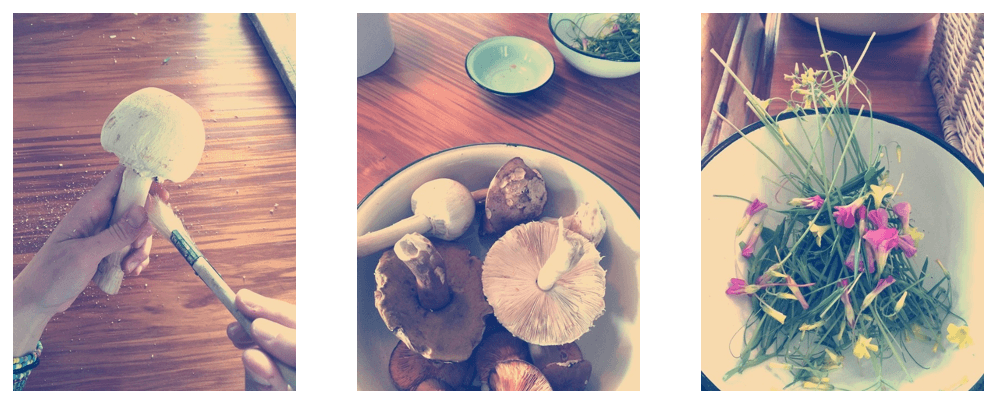 Mushroom forage